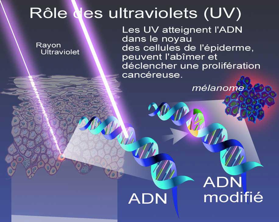 différenciation cellulaire et cancer
